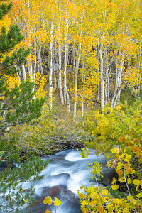 Fall Along Bishop Creek