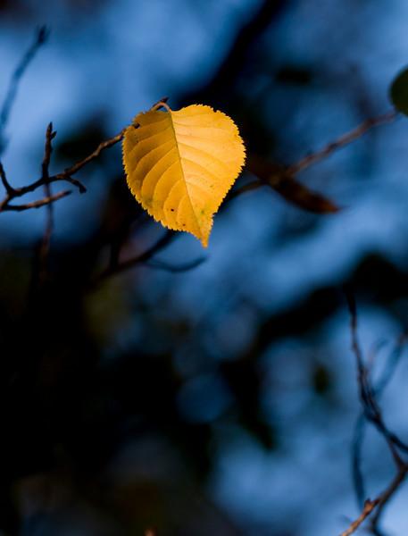 Last leaf hanging