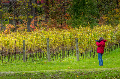 Fall scene in the Niagara wine district
