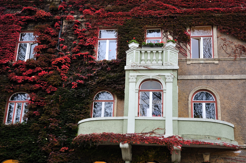 House with Red Ivy  - Freising, Germany