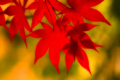 Fall colors 004