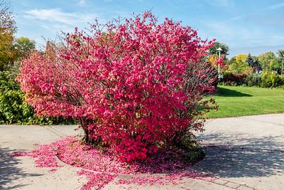 Little Pink Tree