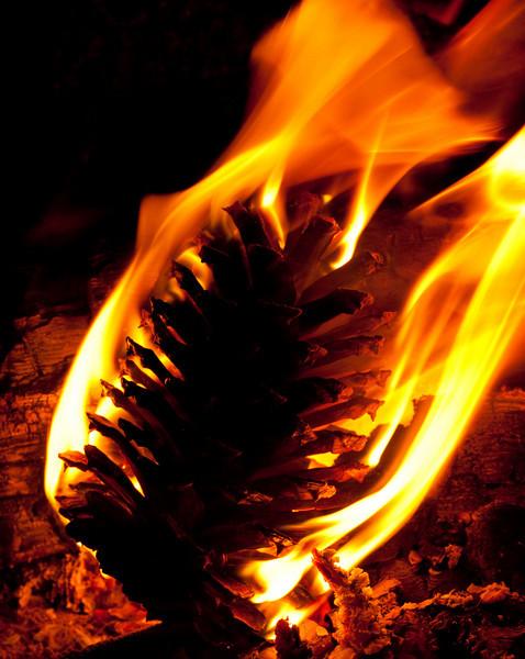 pine cone in a campfire