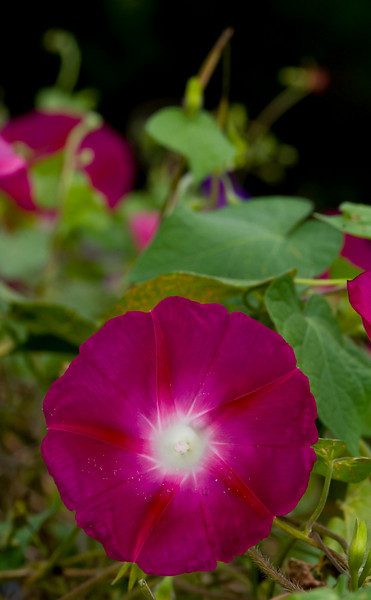 one of my favorite morning glory shots.