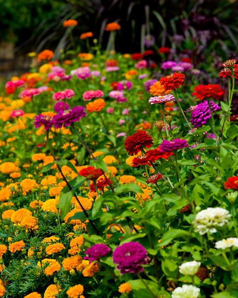 A colorful late summer garden