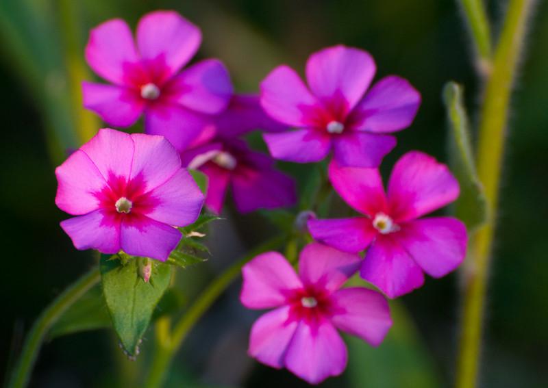 Pretty little blooms