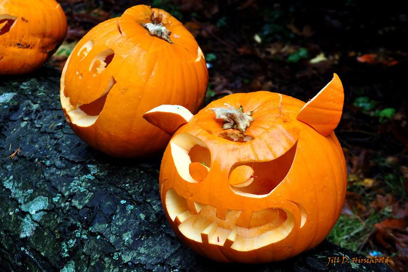 110_PumpkinPatch1