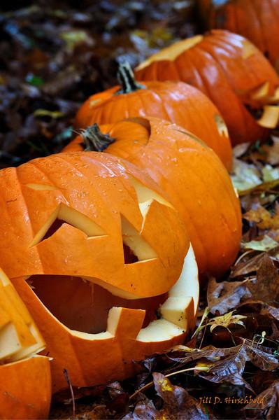113_PumpkinPatch4
