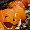 113_PumpkinPatch4