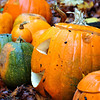 109_PumpkinPatch2