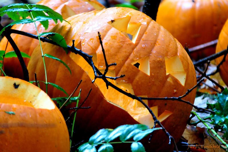 112_PumpkinPatch3