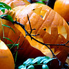 112_PumpkinPatch3