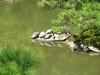 Schildkröten-Insel