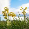 The First-born of Spring / Первенцы Весны