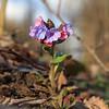 A Messenger of Spring / Вестник Весны