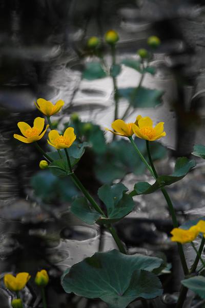 A Spring Aquarell / Весенняя акварель