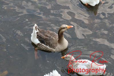 brianrasa_150726_IMG_3912