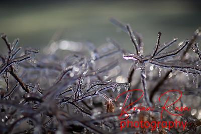 brianrasa_191219_OA0A0323