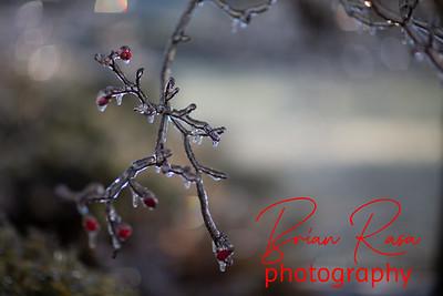 brianrasa_191219_OA0A0328