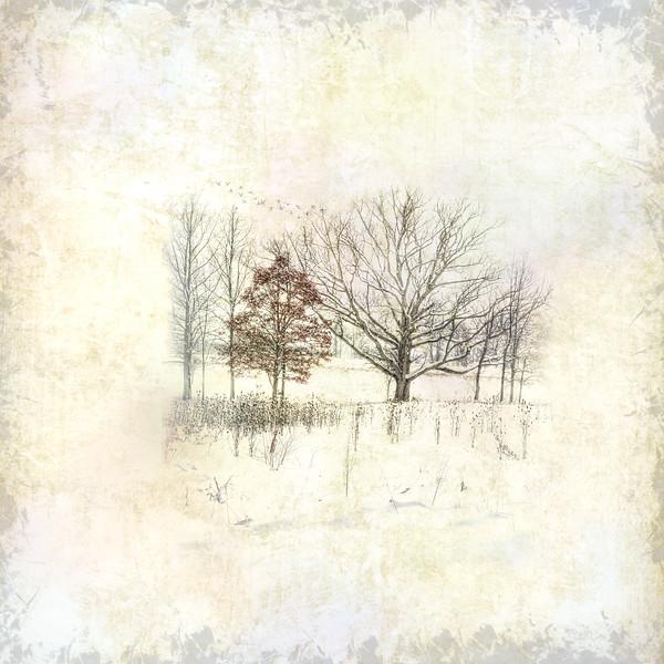 Winter Embrace II