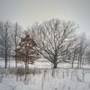 Winter Embrace