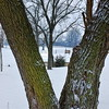 Tree View of Winter