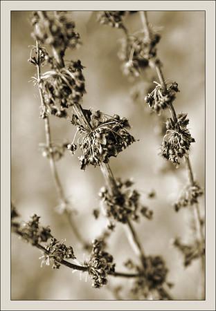004 autumn 2009
