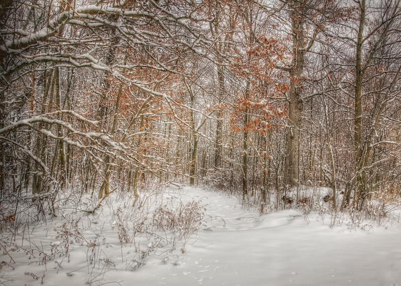 Into the Snowy  Woods