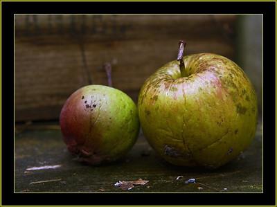 005 autumn 2009
