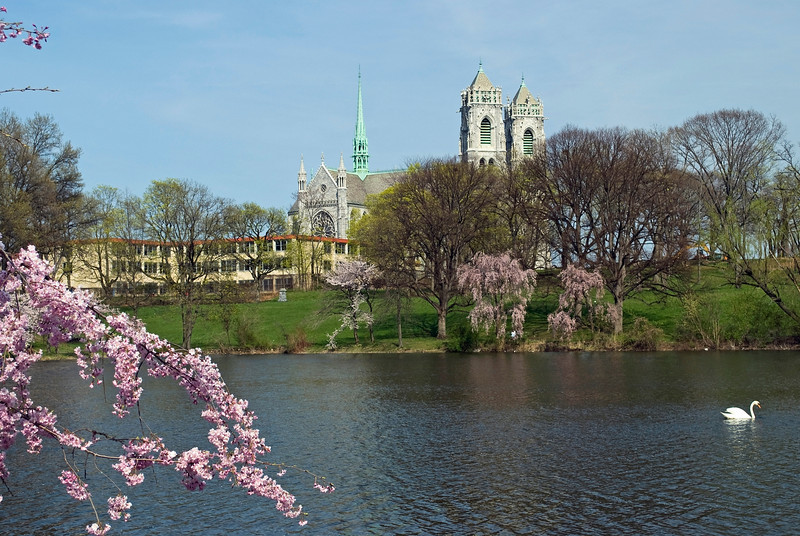 """Branchbrook Blossoms""<br /> A Spring view from Branchbrook Park in Newark of the Sacred Heart Cathedral."