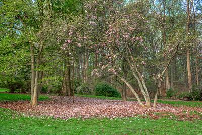 Petals of Spring