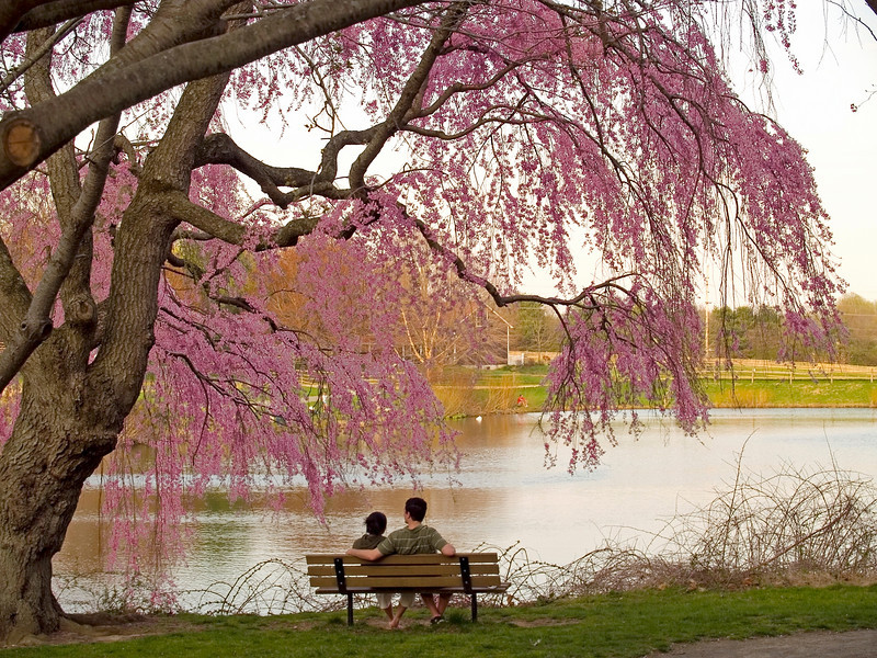 A couple relaxes under the flowering Spring blossoms in Holmdel Park, New Jersey.