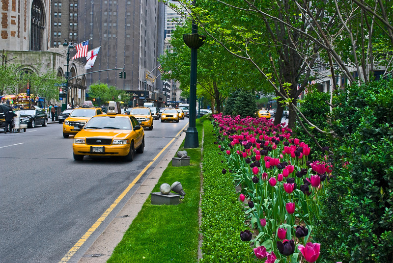 """Tulips, Park Avenue""<br /> Beautiful Spring tulips along Park Ave. in New York City."