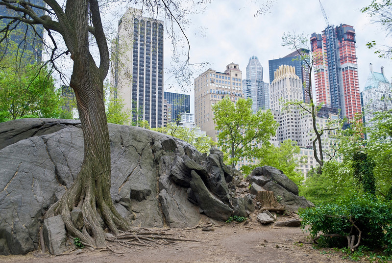 Rock View Central Park<br /> <br /> Glacial rock and skyscrapers  are part of the landscape in Central Park in New York City.