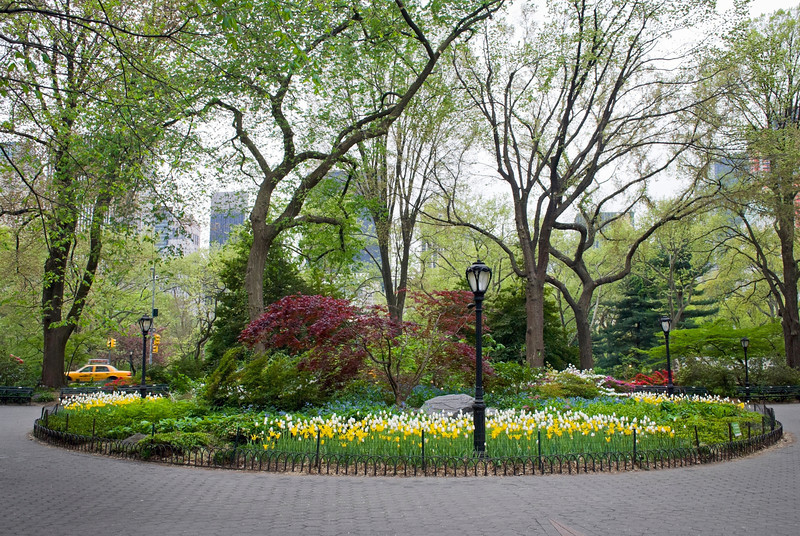 """Central Park Garden""<br /> An ornamental spring Garden in Central Park in New York City."