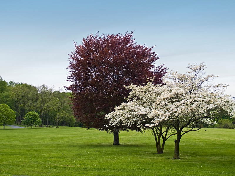 """Colors of Spring""<br /> Spring in full bloom here in Holmdel Park in New Jersey."