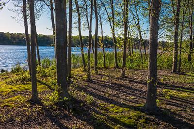 Trees Along the Shoreline