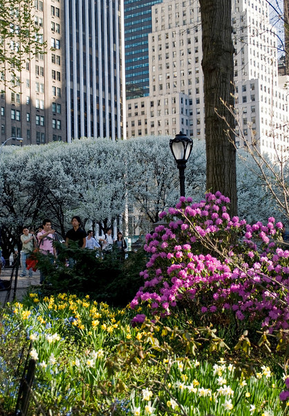 """Spring Blooms, Central Park""<br /> A Spring view of the gardens and buildings from Central Park in Manhattan."