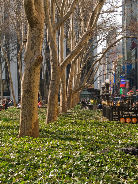 """Bryant Park Trees""<br /> Early Spring and  sycamore trees in Bryant Park in Manhattan."