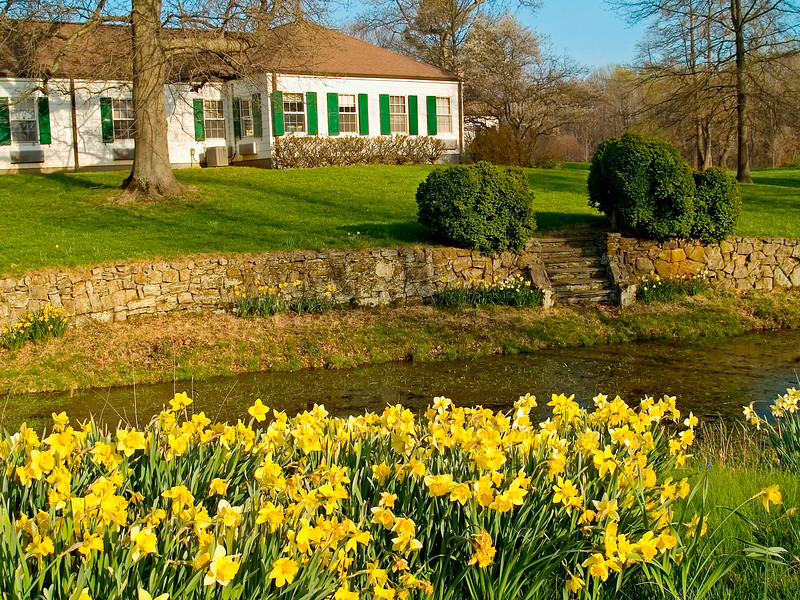 """Spring Yard""<br /> Spring daffodils and a small pond in front of this home in Central New Jersey."