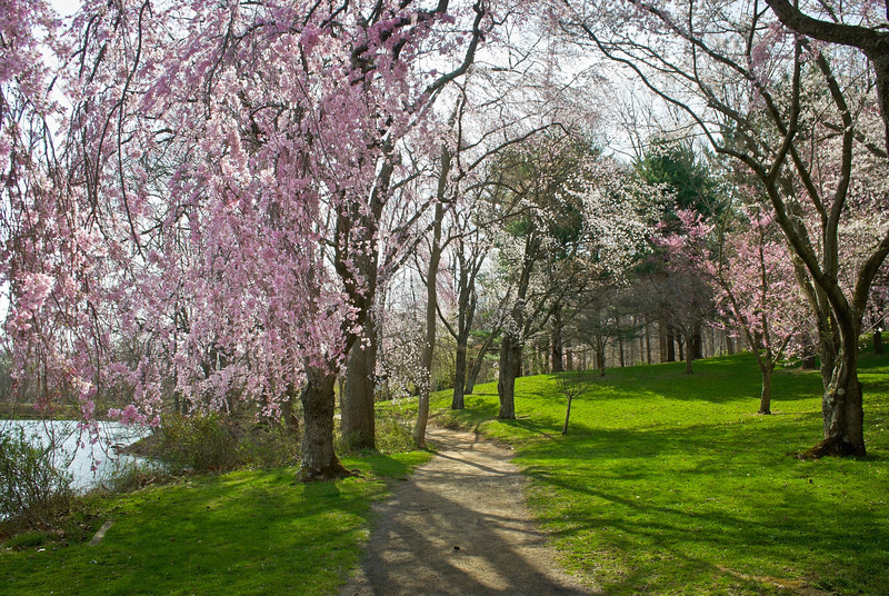 """Spring Park"" <br /> A  colorful Spring pathway through Holmdel Park in Monmouth County in New Jersey."