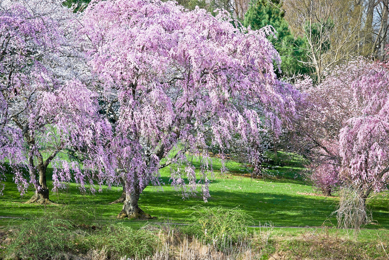 """Spring Colors""<br /> The vibrant color of Spring blossoms at Holmdel Park in Monmouth County, New Jersey."