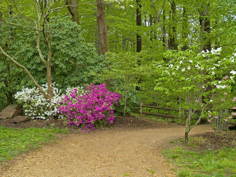 """Spring Trail"" <br /> A Spring view of a walking path in Holmdel park in New Jersey."