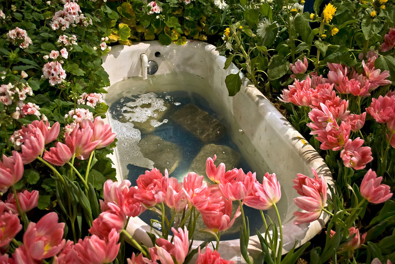 A Spring tulip and bathtub display at the 2011 International Flower Show in Philadelphia Pennsylvania.