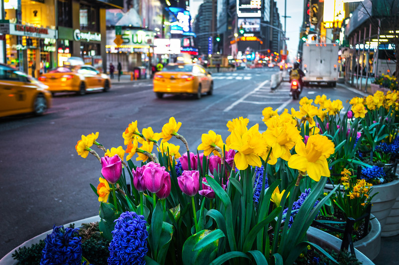 Times Square Spring Planters