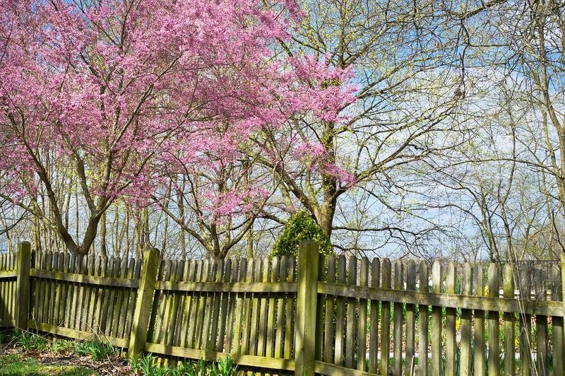 Spring Backyard