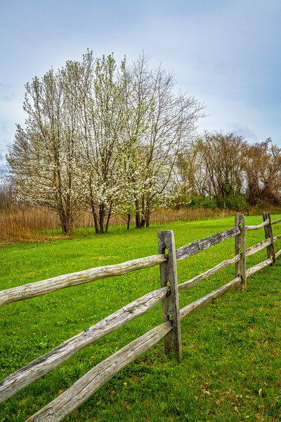 Fence of Spring