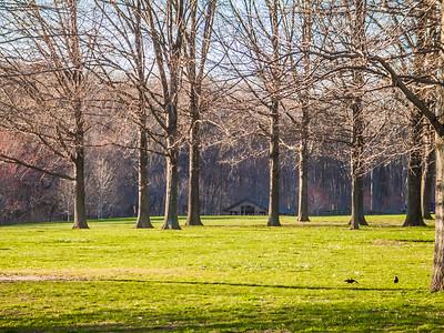 Leafless Spring Landscape