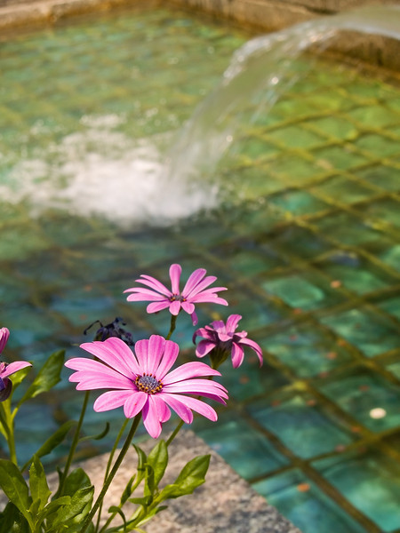 A water fountain background and Spring flowers in Rockefeller Center in Manhattan.