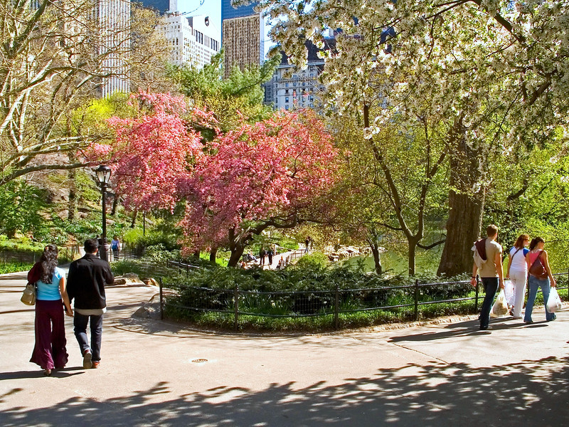 """Spring Walk""<br /> A beautiful Spring day in Central Park in New York City."